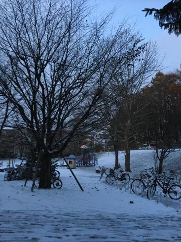 札幌は雪❄️